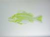 Fisch & Fischskelett - Weissgrün