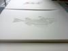 Fischskelett - Weiss